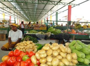 野菜や果物がずらりと並ぶ日曜日の露天市場