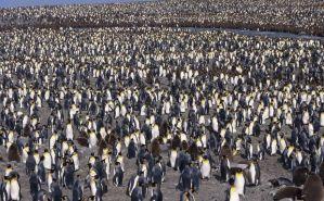 ペンギンの里